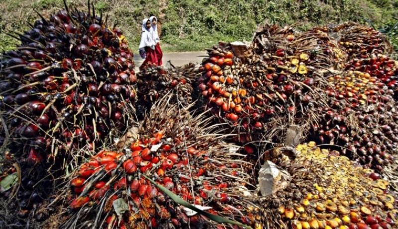 Photo of Produksi Berlebih, Pengusaha Sawit Mengandalkan Program Biodiesel